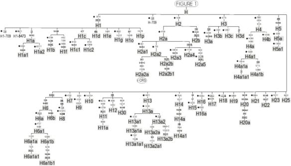Y DNA – DNAeXplained – Genetic Genealogy