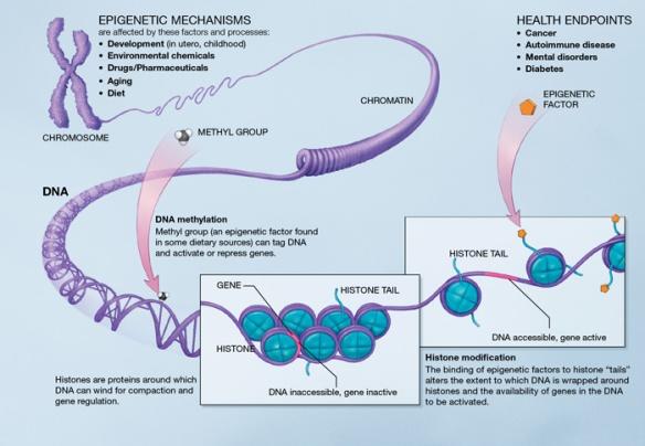 epigenetic factors