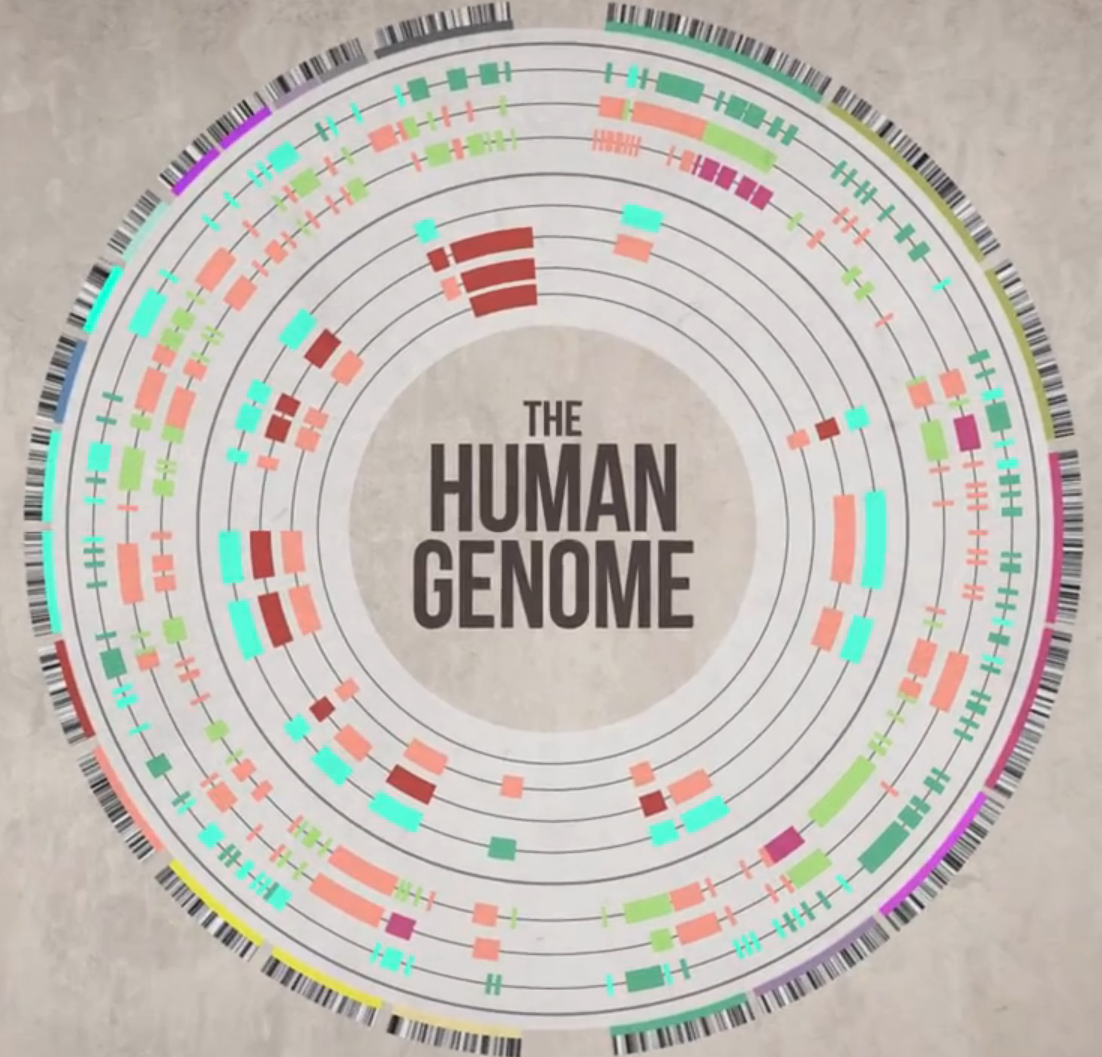 the benefits of the human genome project Disadvantages of the human genome project, or hgp, include the number of risks involved in the procedures and discrimination against specific traits this project.