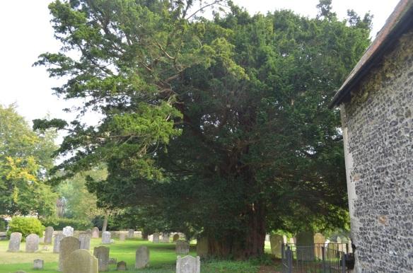st nicholas ringwould churchyard10