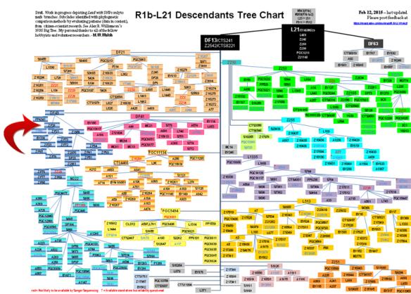 R-L21 tree crop