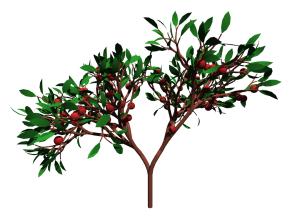 2 branch tree