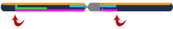 4 gen crossover