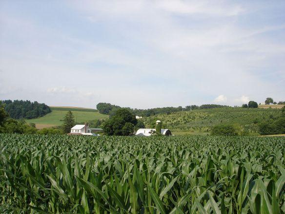 York farm