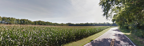 Daniel Miller corn fields
