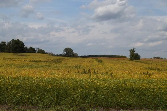 ulrich-field