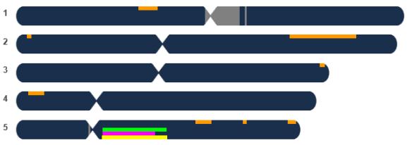 jane-chromosome-browser