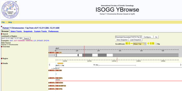 Snp single nucleotide polymorphism dnaexplained genetic genealogy ybrowse is more fussy and complex to use than doing the simple isogg search you only need to utilize ybrowse if your unnamed variant isnt listed in the by solutioingenieria Choice Image